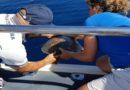 """Egadi. Il 17 agosto si è svolto il Tartaday, giornata promossa dai partner del progetto """"TartaLife"""" per celebrare le tartarughe marine"""