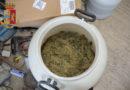 Trapani: la Polizia di Stato sequestra 5.3 kg di cannabis, un'arma clandestina ed effettua due arresti.