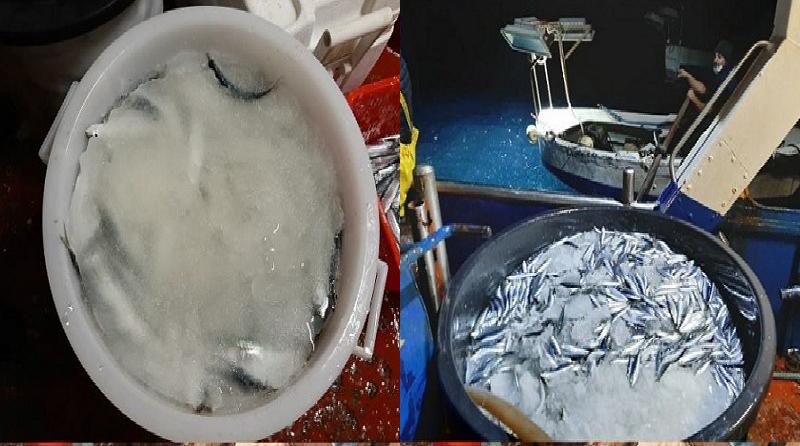 Il Distretto della Pesca e Crescita Blu di Mazara del Vallo sta sperimentando con successo un nuovo tipo di ghiaccio per una migliore conservazione del pescato - Tele8